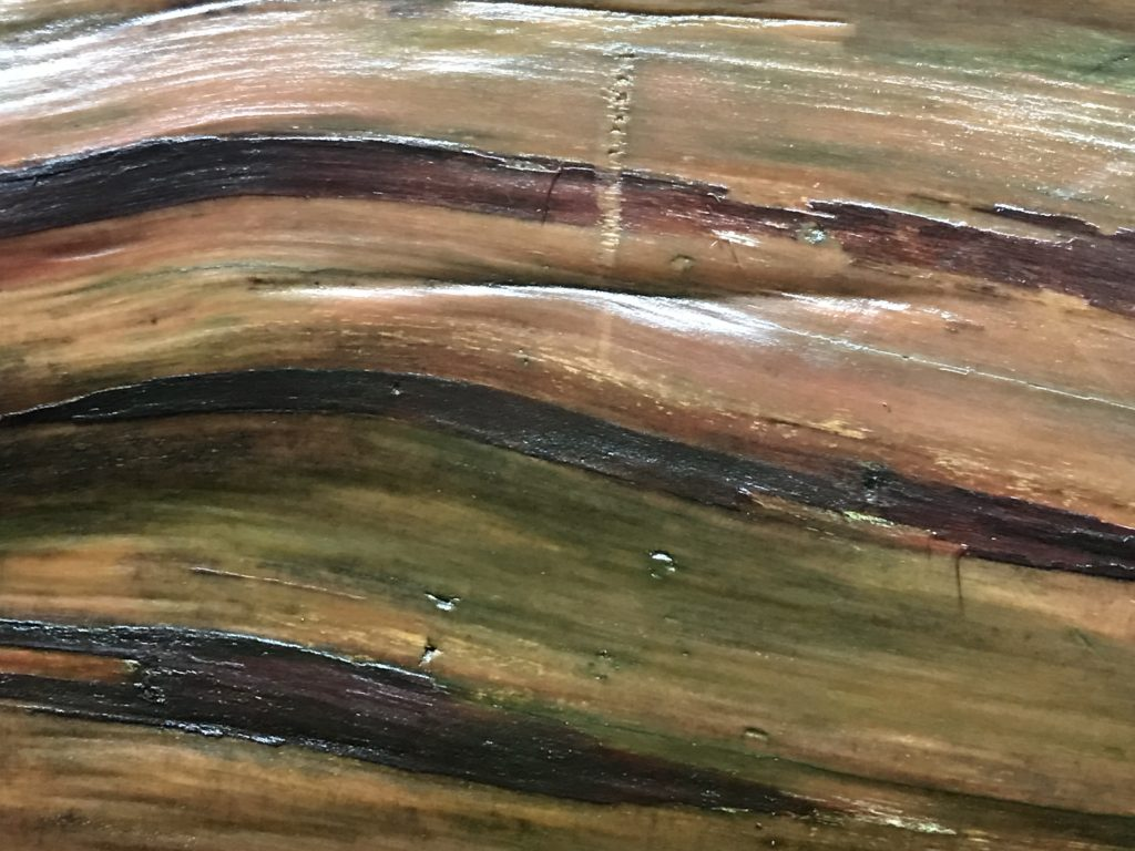 Redwood Closeup